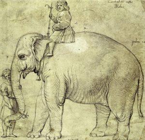 elefante-annone-raffaello